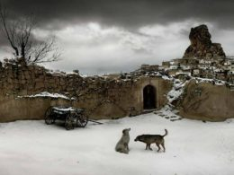 Dogs in Capadocia